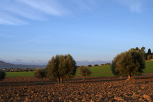 Tree In Field, Landscape, Sky, Agriculture, Nature, Rural,blue, Farm, Grass, Tree, Land, Meadow, Countryside, Autumn,