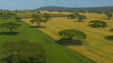 Fototapeta Sawanna - AERIAL: Flying over the vast wheat fields covering the vast African landscape.