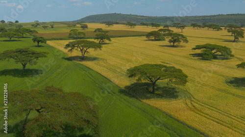 Foto op Plexiglas Weide, Moeras AERIAL: Flying over the vast wheat fields covering the vast African landscape.
