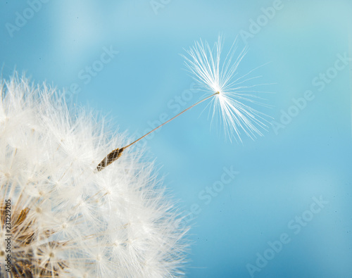 Dandelion with seeds close up on a background of blue sky