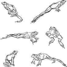 Frog, Jump, Options, Illustrat...