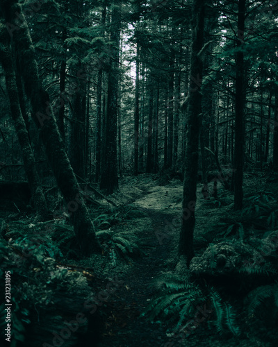 Tuinposter Weg in bos Forest filled with trees