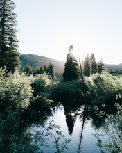 A Lake Surrounded By Trees And Plants