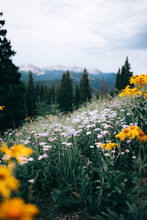A Field Of Flowers With Trees And Mountains In The Background