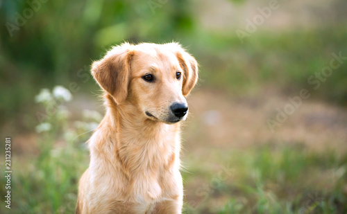 Foto portrait of a mongrel dog