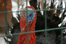Funny Animals And Birds In Winter And Summer In The Zoo, At Home, In The Aquarium