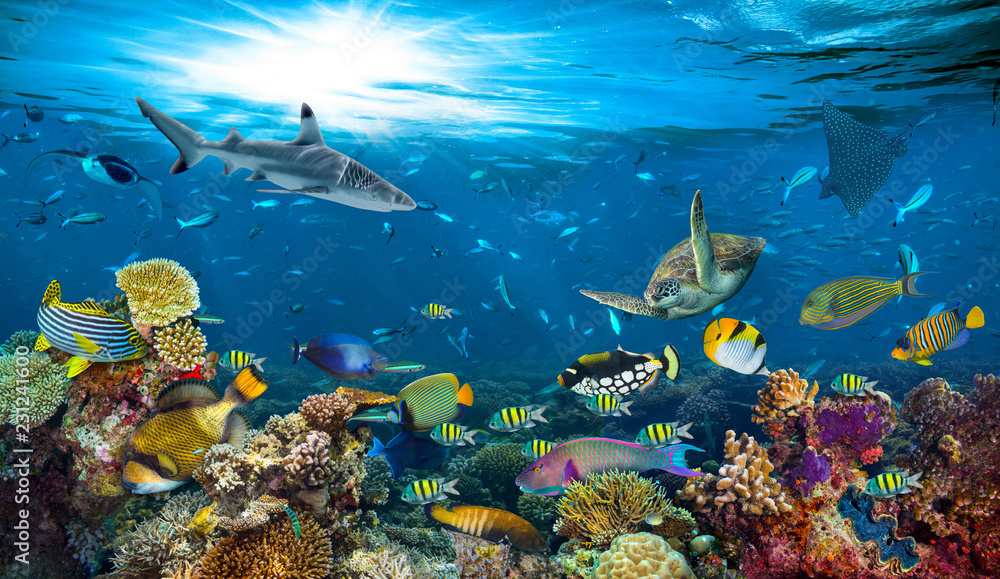 Fototapeta underwater paradise background coral reef wildlife nature collage with shark manta ray sea turtle colorful fish background