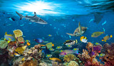 underwater paradise background coral reef wildlife nature collage with shark manta ray sea turtle colorful fish background
