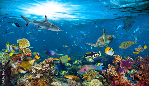 fototapeta na lodówkę underwater paradise background coral reef wildlife nature collage with shark manta ray sea turtle colorful fish background