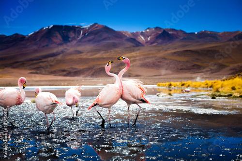Garden Poster Flamingo James flamingo