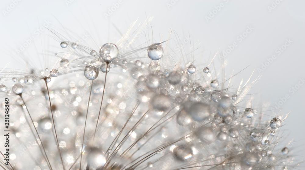 Fototapety, obrazy: Detail einer Pusteblume