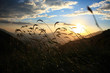 Sunset wind