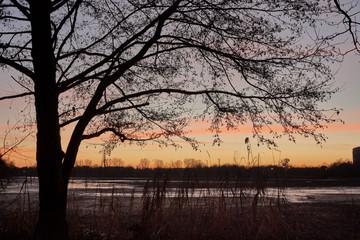 Kahle Erlenäste, Sonnenuntergang im Winter am Dutzendteich