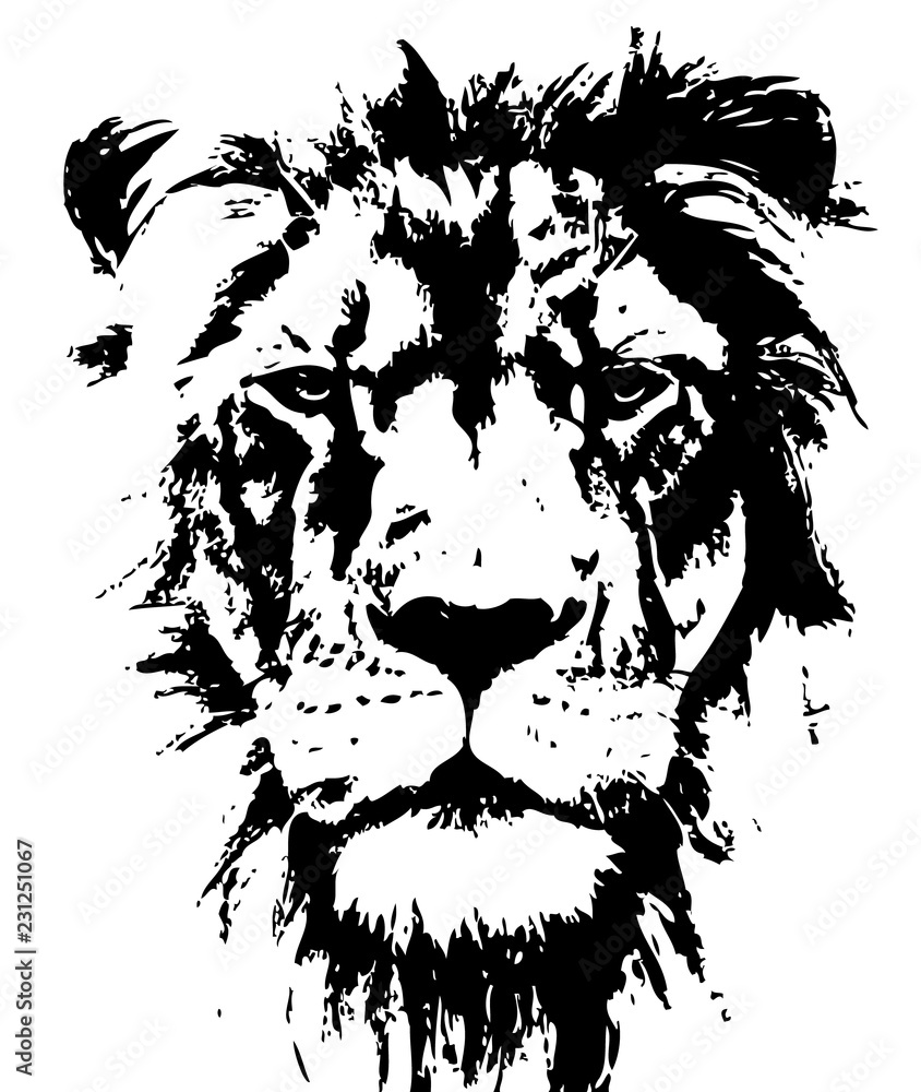Fototapeta Lion head vector hand drawn