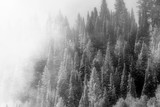First Snow - 231260262