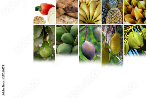 Arrangement with photo collage of tropical fruits © Jaboticaba Images
