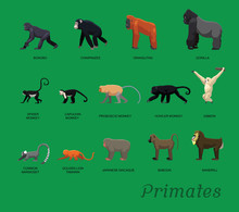 Primate Species Set Cartoon Ve...