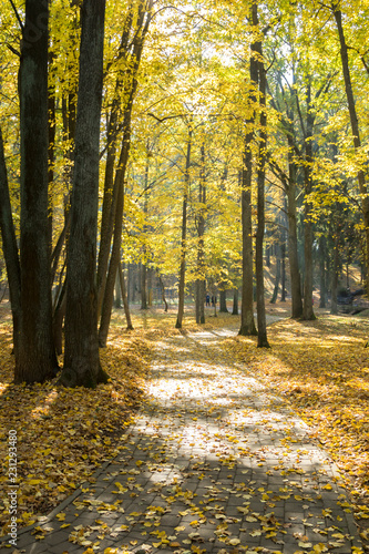 Spoed Foto op Canvas Honing Autumn landscape. Pathway in the autumn park.