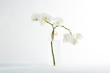 Branch White Orchid In The Glass Vase