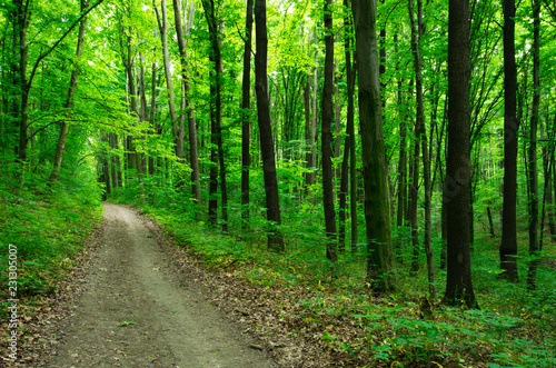 Papiers peints Forets Path in green forest