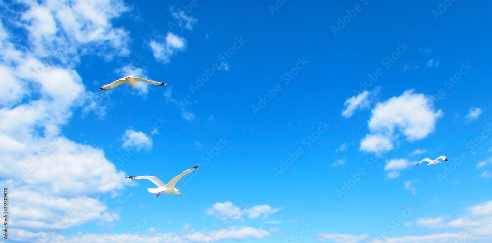 Seagulls flying in the blue sky with clouds.