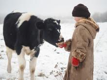 A Little Girl Treats A Big Cow...