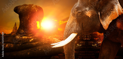 Spoed Foto op Canvas Asia land ivory elephant and ayuthaya ancient pagoda with sunset sky background