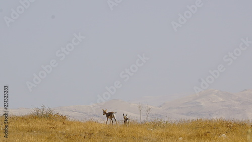 Poster Donkergrijs antelope landscape