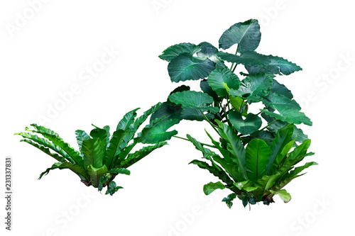 Poster Vegetal plant isolated with clipping path