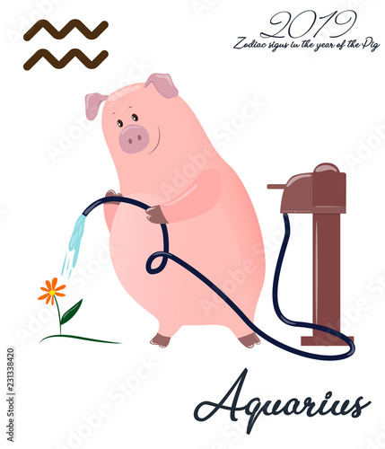 Zodiac pig Aquarius  Chinese horoscope symbol 2019 year