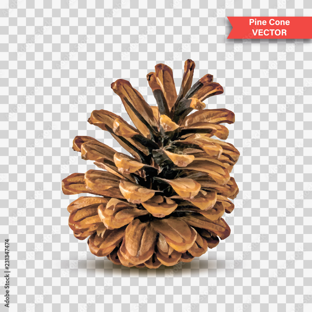 Fototapety, obrazy: Single detailed pine cone isolated on transparent background. Object Decor for New Year and Christmas. Realistic Vector Illustration