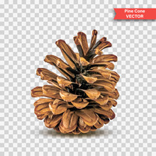Single Detailed Pine Cone Isolated On Transparent Background. Object Decor For New Year And Christmas. Realistic Vector Illustration