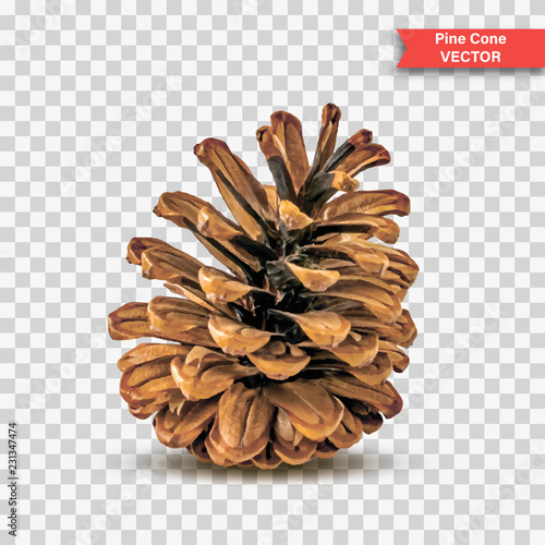 Fototapeta  Single detailed pine cone isolated on transparent background