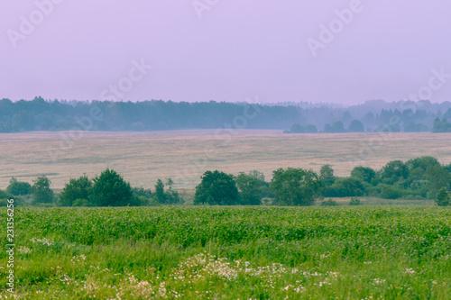 Tuinposter Purper Fog over fields, landscape