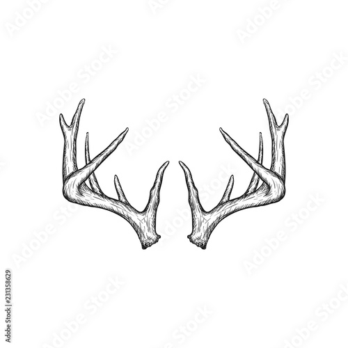 Handrawn antler vector, Hunting logo design inspiration Wallpaper Mural