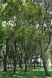 talll trees in a park
