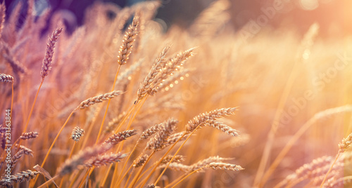 Fotografía  Wonderful rural landscape