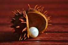 Pieksig-stachelige Rosskastanie Mit Weißer Perle Im Herbstlicht