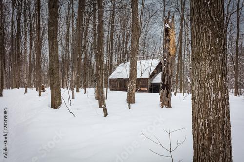 Tablou Canvas Sugar shack deep in a Boreal forest Quebec, Canada.