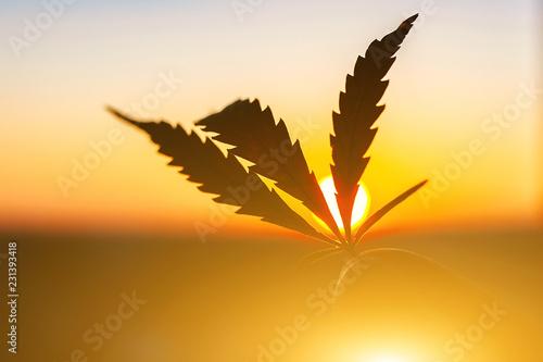 Photo  Leaf of marijuana against the sunset sky with sun rays