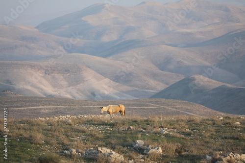 Tuinposter Donkergrijs horse mounts landscape