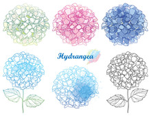 Vector Hand Drawn Set Of Outline Hydrangea Or Hortensia Flower Bunch In Pastel Pink And Blue Isolated On White Background. Contour Ornamental Garden Plant Hydrangea For Summer Design.