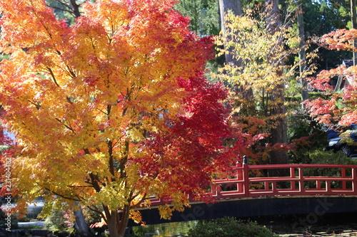 plakat 高野山の紅葉