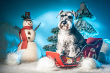 The Dog Sits In A Sled. New Year. Snowman. Christmas. Dog In Winter New Year Holidays. Winter Fun.