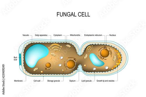 Carta da parati Fungal hyphae cells