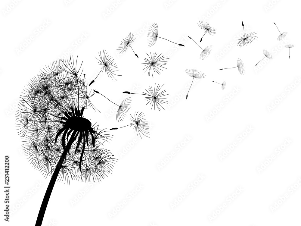 Fototapety, obrazy: Abstract black dandelion, dandelion with flying seeds - for stock