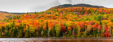 Fall Scene In The Quebec Cottage Country With Golden Leaves And Fall Colors.