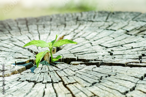 Photo  A strong seedling growing in the center trunk tree as a Concept of support building a future