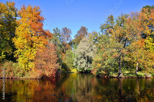 Foto op Canvas Bomen trees with colorful foliage in autumn Park