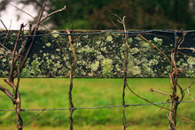 Lichen Covered Fence On A Farm